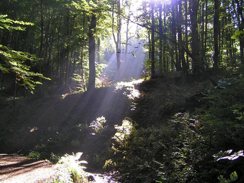 Wald-Siebengebirge-CPreuss-01